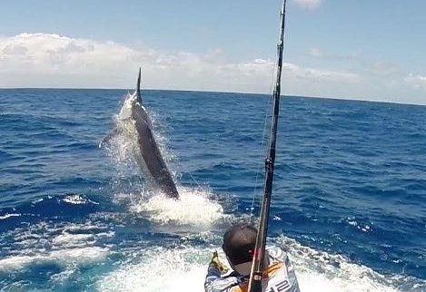 live aboard fishing charters Giant black marlin charters Cairns Topnotch Game Fishing