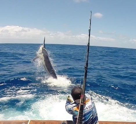 Cairns live aboard fishing charters Giant black marlin charters Cairns Topnotch Game Fishing