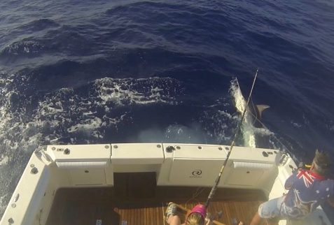 Giant black marlin charters Billfish Babes Marlene Hicks Topnotch Game Fishing