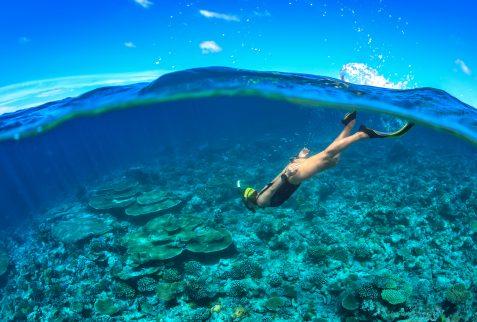 Hayman Island Daydream Island Destinations Whitsundays snorkelling