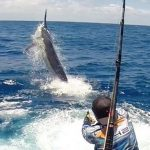 Topnotch Game Fishing Cairns Black Marlin