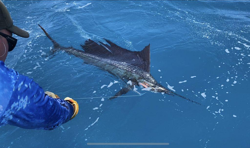 Whitsundays sports fishing trips