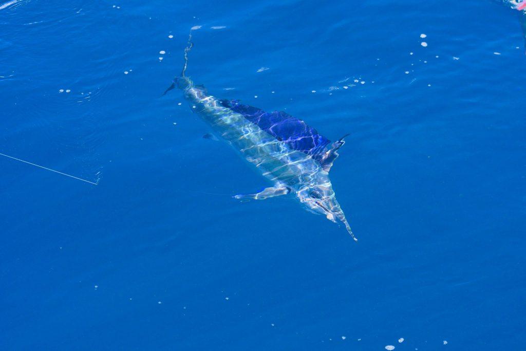 Hamilton Island Fishing Charters