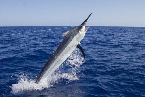 whitsunday sports fishing trips